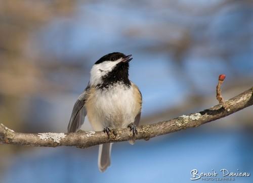 Les oiseaux du Canada