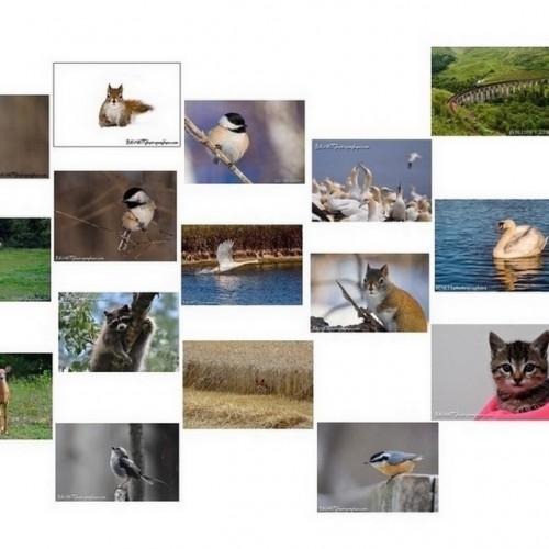 Collection de 23 cartes postales