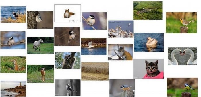 Collection de 25 cartes postales