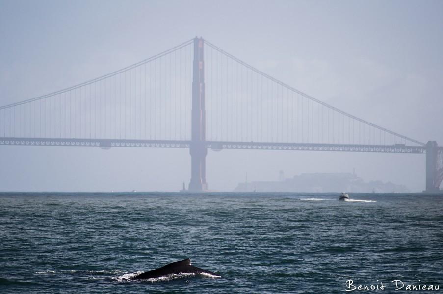 Baleine San Francisco