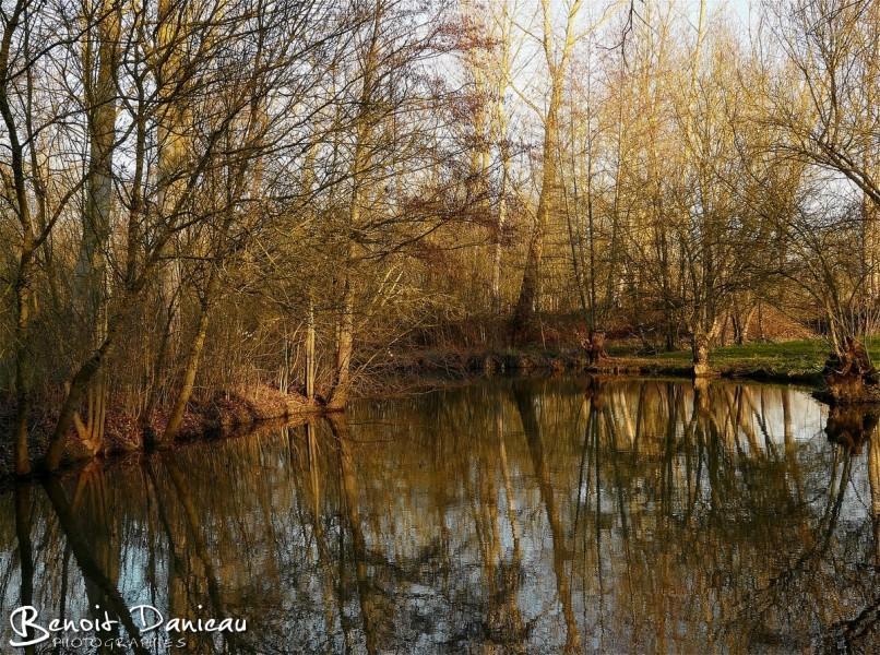 Canal dans le Marais Poitevin en hiver