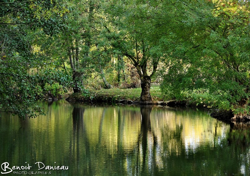 Marais Poitevin été