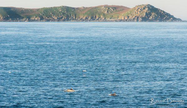 dauphins perros guirec