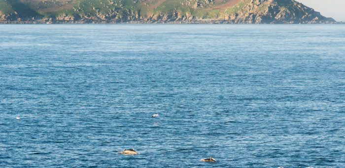 Dauphins au large de Perros Guirec 20x30cm